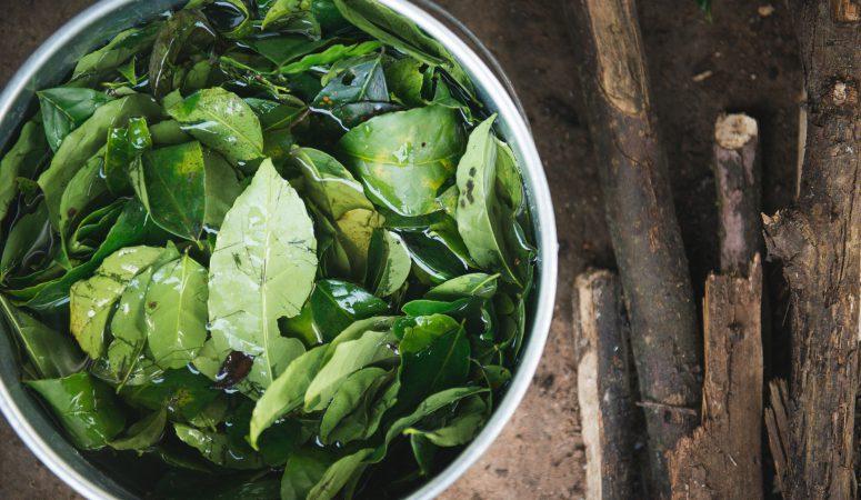 Achtsam und voller Energie mit Guayusa Tee