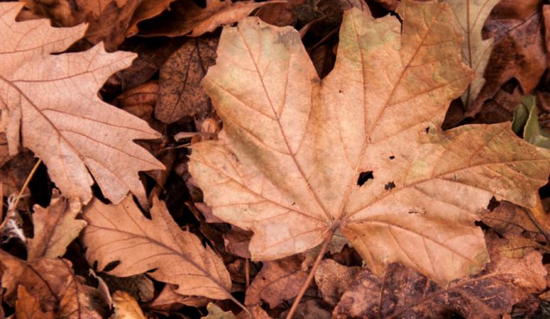Gratis Herbst Bucket List Template für dich zum downloaden