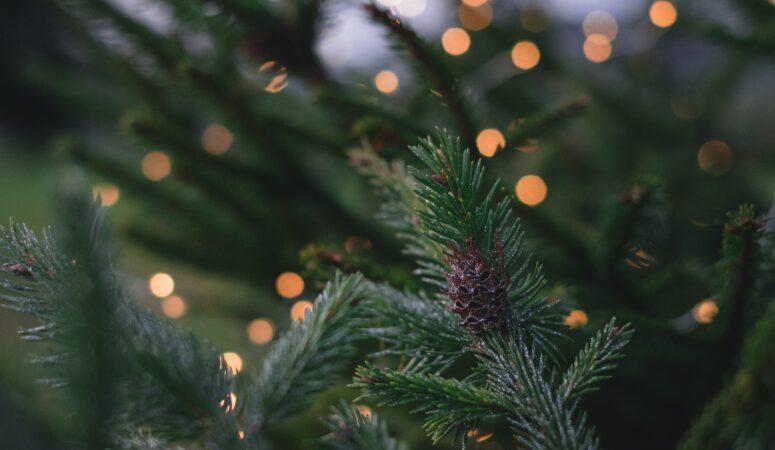 Neue Weihnachtstraditionen für dich/euch/ deine Familie
