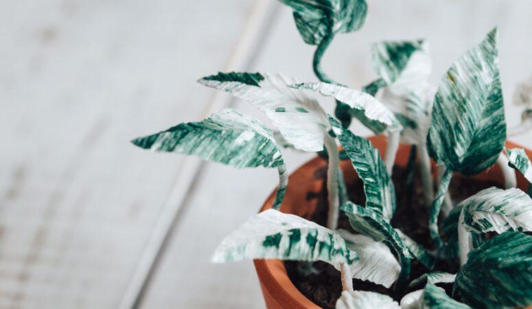 Nachhaltiger leben - 10 Dinge du du sofort für die Umwelt und unser Klima tun kannst!