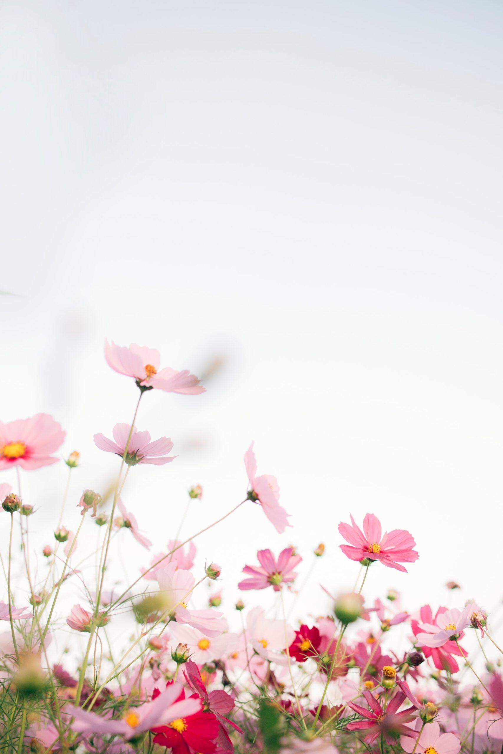 15 Self Care Ideen für den Frühling - nimm dir Zeit für dich und dein Wohlbefinden!